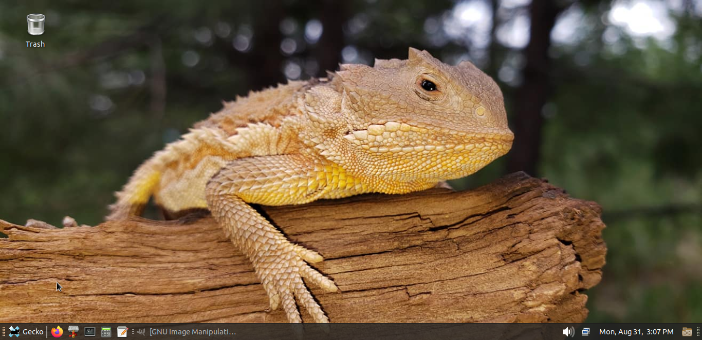Gecko(1).png