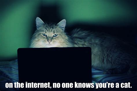 on the internet.jpg
