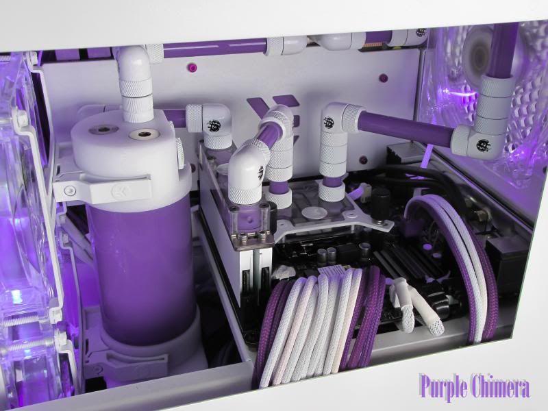 purplechimera-33_zpsdfbeb694.jpg
